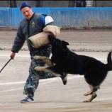 Клуб служебного собаководства РОСТО стал вторым на ЧР