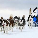 Собаки крайнего севера будут соревноваться в Новосибирске