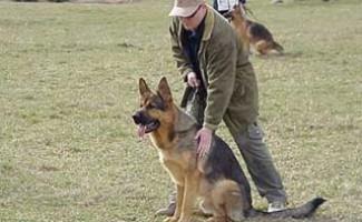 Фестиваль собак - 2010